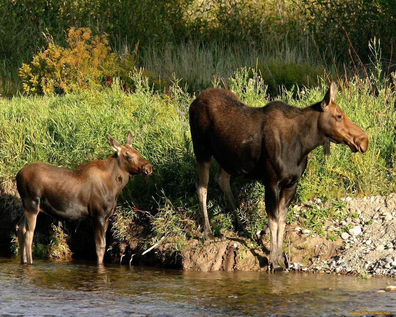 картинки животных белгородской области беслане стало